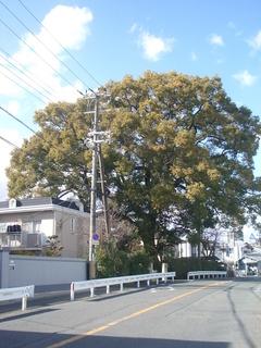 furukawa_201703.jpg