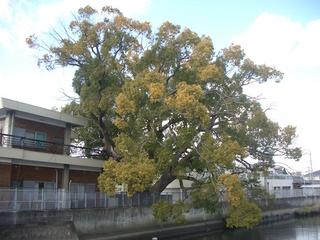 hiejima_201703.jpg