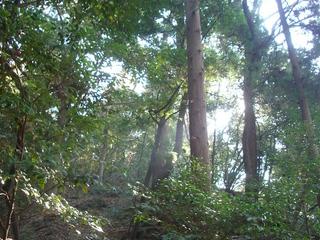 hiraoka_tree.jpg