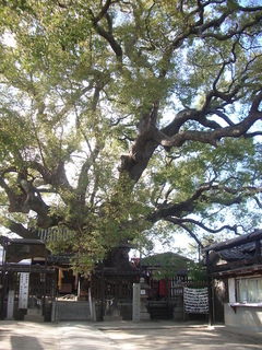 mitsushima_shrine1_201703.jpg