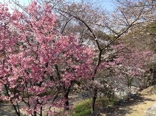nawate_shrine201704-2.jpg