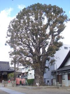 shimagashira_201703.jpg