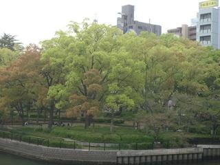 tree201404.jpg